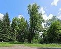 Gaming - Linde am Mitterberg (Naturdenkmal).JPG