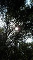 Garden Way - Wall - trees - streamlet - 17 Shahrivar st - Nishapur 12.JPG