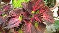 Garden plant - Flickr - Swami Stream.jpg