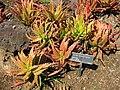 Gardenology.org-IMG 2765 hunt0903.jpg