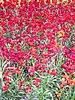 Gardens red flowers.jpg
