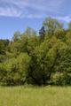 Gemuenden Ehringshausen Feldatal Salix alba.png