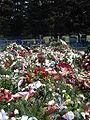 Gen Franciszek Gągor grób.JPG