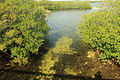 Gfp-florida-keys-key-largo-sea-bound-stream.jpg