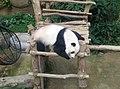 Giant Panda Conservation Centre in Zoo Negara Malaysia 2021 (5).jpg