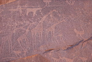 Gilf Kebir - Ancient petroglyphs of a temperate era's giraffe, ostrich, and longhorned cow being herded, in the present day Libyan Desert in Egypt.