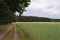 Glietzer Wald 04.JPG