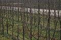 Gmina Koprzywnica, Poland - panoramio (7).jpg