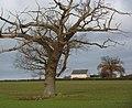Gnarled tree and field towards Manor Farm - geograph.org.uk - 1598416.jpg