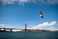Golden Gate Bridge and bird.jpg