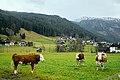 Gosau, Austria (40708498231).jpg
