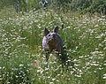 Grünzug Bundesviertel Wolf.jpg
