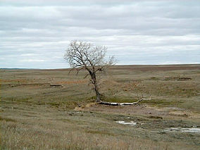 Grand River NG Lone Tree.jpg