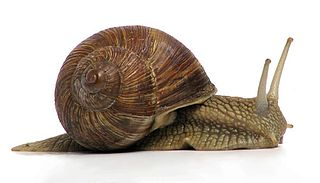 Gastropoda class of molluscs