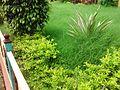 Green Garden in.jpg