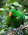 Green Parrot in Australia Zoo-02+ (1927749269).jpg