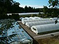 Greenhouse and polytunnels - geograph.org.uk - 194573.jpg