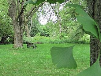University of Guelph Arboretum - Image: Guelph Arboretum Gingko biloba