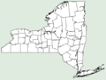 Guizotia abyssinica NY-dist-map.png