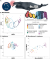 Gut microbiome and lipidome of bowhead whales.webp