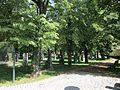 Hřbitov Strašnice 10.jpg