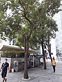HK 中環 Central 德輔道中 Des Voeux Road Central Statue Square Garden October 2020 SS2 01.jpg