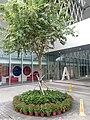 HK TKL 調景嶺 Tiu Keng Leng 香港知專設計學院 HKDI 李惠利工業學院 LWL campus June 2018 LGM 14.jpg