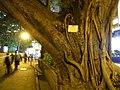 HK TST night Nathan Road Banyan tree Sept-2012.JPG