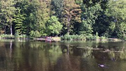 Bestand:Haagse Bos park, The Hague, Netherlands, 2020-08-09.webm