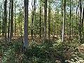 Hambach forest 57.jpg