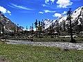 Har ki doon valley -Sankari Range -Uttarakhand-DSC 0003.jpg