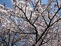 Hara Nagoya 0937.JPG