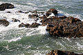 Harbor Seals at Pescadero State Beach.jpg