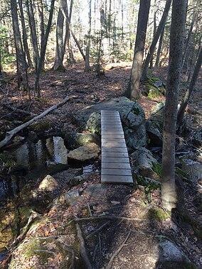 Harold Parker State Forest.jpg