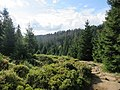 Harz Brocken Sept-2015 IMG 6338.JPG
