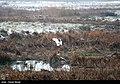 Hashilan Wetland 13951113 12.jpg