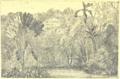 Haurigot - Excursion aux Antilles françaises, 1890 - Illustration p75.png