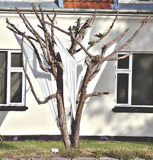Nivå - Image: Havefiguren Splitte mine bramsejl