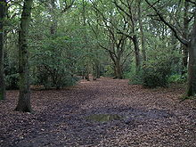 Hearsall common woods