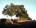 Hedgerow - geograph.org.uk - 272381.jpg