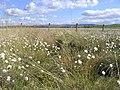 Hellhole Moss - geograph.org.uk - 435073.jpg