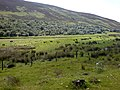 Helmsdale River, hillside, forest and grazing - geograph.org.uk - 478785.jpg