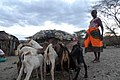 Herding in the Drought.jpg