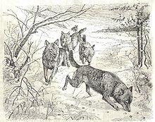 Manada De Lobos Wikipedia La Enciclopedia Libre