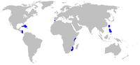 Range of bigeyed sixgill shark (in blue)