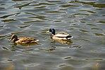 High Park, Toronto DSC 0195 (17393722205).jpg