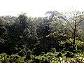 Himchori Hills Deep and Wide Forest.jpg