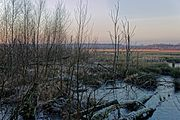 Himmelmoor winter totholz 02.jpg