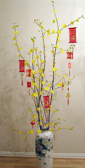 New Year tree - A small hoa mai tree decorated for Vietnamese Tết