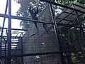 Hong Kong Zoological and Botanical Gardens 05.jpg